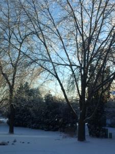 Treee in Sunshine